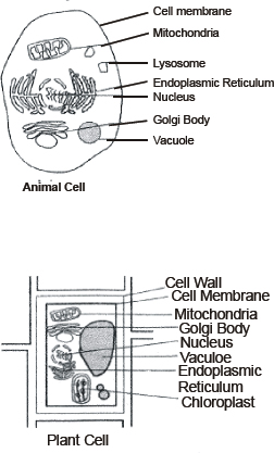 CBSE 9, Biology, CBSE-The Fundamental Unit of Life, Notes